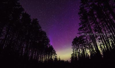 Sawbill Aurora and Trees