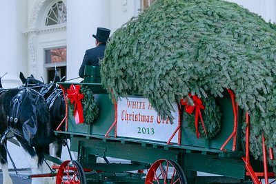 Official White House Christmas Tree