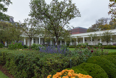 The White House Rose Garden
