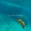 Hawaiian Green Sea Turtle Floating