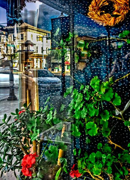 Plants, Cars, Window