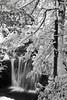 Shays Run, Winter, Blackwater Falls State Park, Snow, Running Water, Elekala Falls, #1