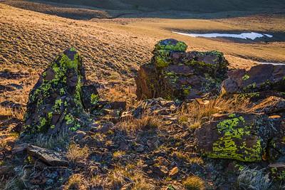 Lichen glow, Owyhee County, Idaho.