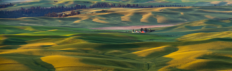 Palouse Panorama in Summer