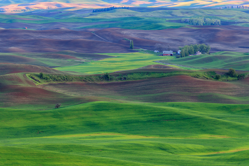 Rolling Palouse Fields
