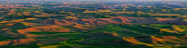 The Palouse Pano