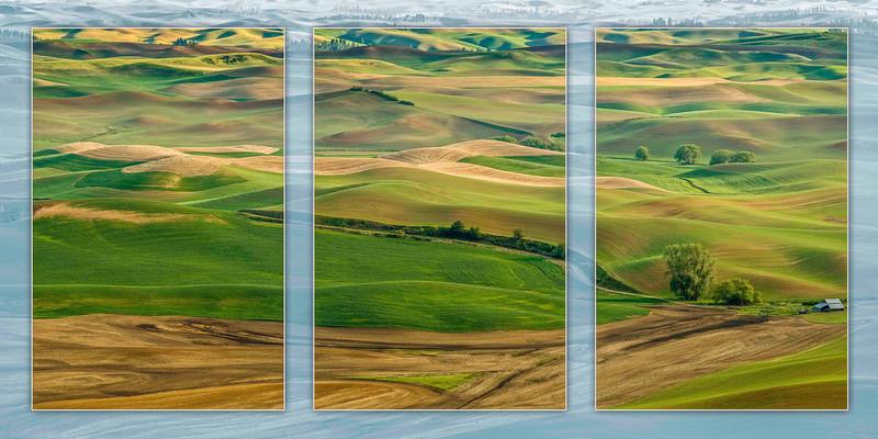 Palouse Wheat Field Triptych