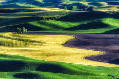 Fields of Purple and Gold