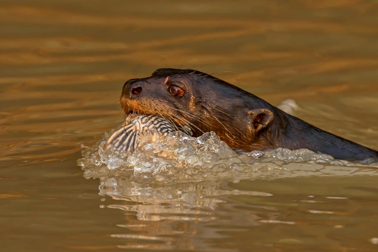 Catfish Got Your Tongue