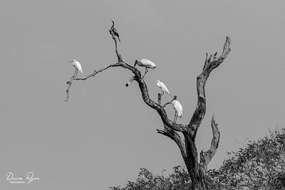 The Pantanal Hangout