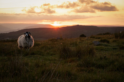 Sunset in the Peak District, The locals don't look too impressed