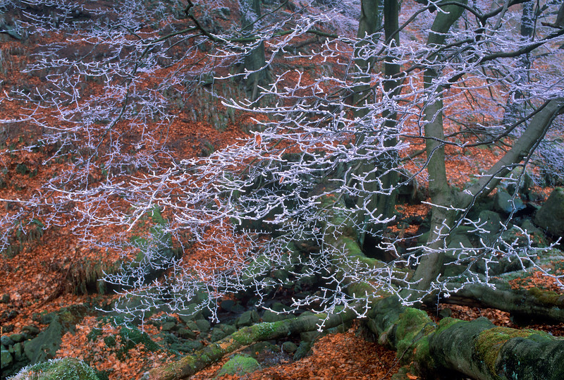The first frost,Lightwood ,Buxton