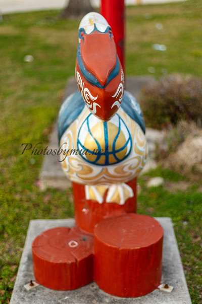 Basketball Pelican_119_3