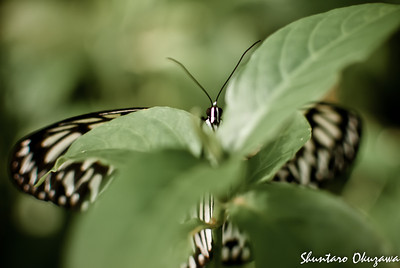 Butterfly in Bohol