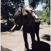 On Elephant