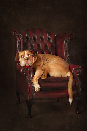 Fine art Dog Photography