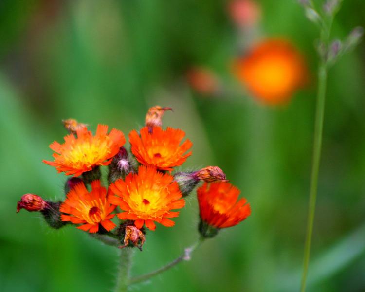 "In a New Light Pioneers: De'Vante, 16 - ""Red Flower"""