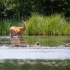 "In a New Light Pioneers: Travis, 13 - ""Deer in the River"""