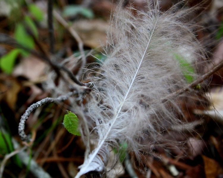 """In a New Light Pioneers: Michael, 17 - """"Feather"""""""