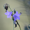 "In a New Light Pioneers: De'Vante, 16 - ""Painted Flower"""