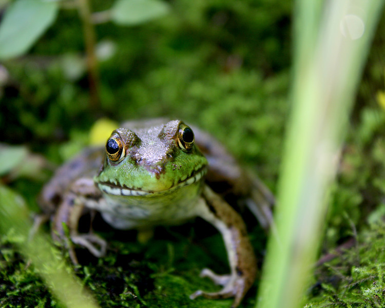 """In a New Light Pioneers: Derek, 17 - """"Inquisitive Frog"""""""