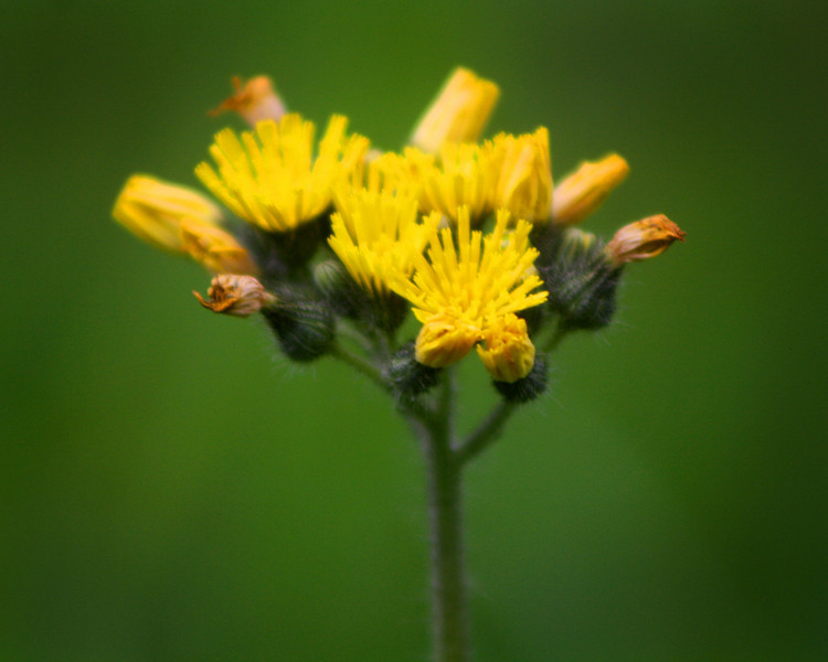 """Yellow"" by De'Vante, 16   The Pioneers"