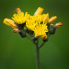 """Yellow"" by De'Vante, 16 | The Pioneers"