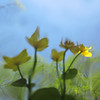 """In a New Light Pioneers: Lee, 15 - """"A Fish's View of Flowers"""""""