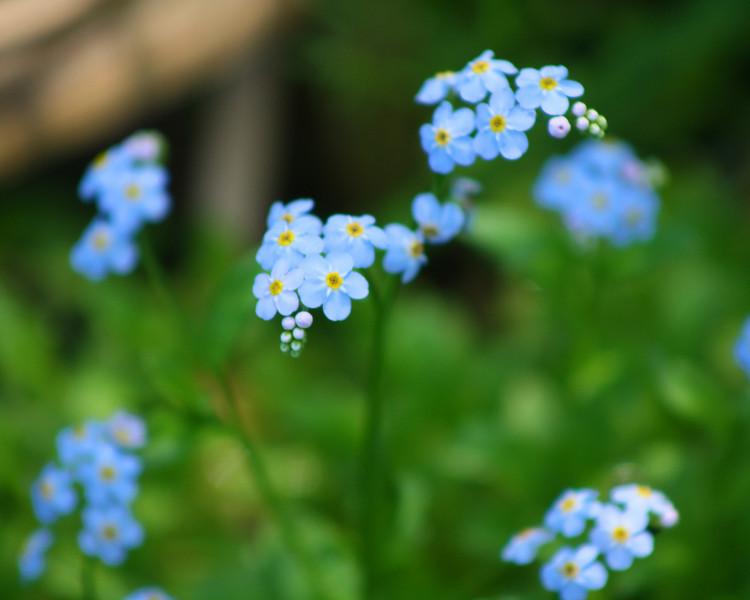 """Blue"" by De'Vante, 16   The Pioneers"