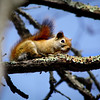 """Red Squirrel"" by Jermaine, 16 