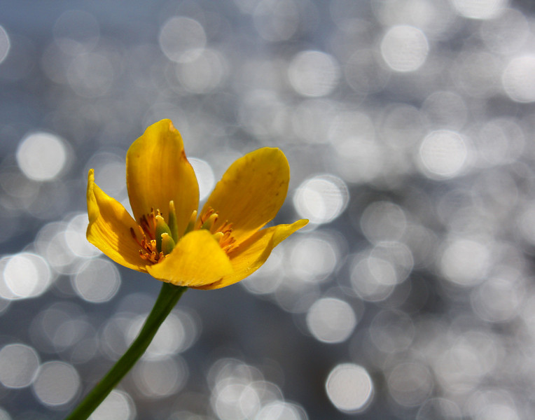 """Sparkling Marigold"" by Craig, 13 