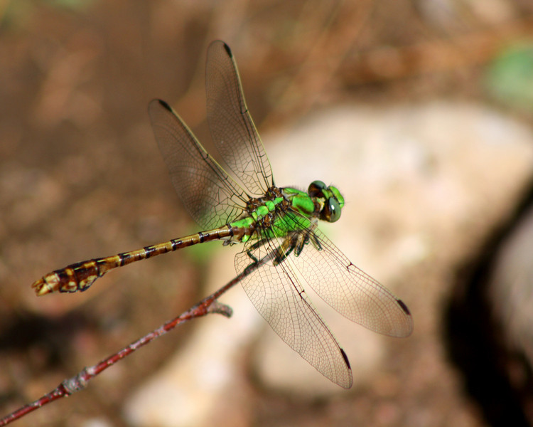 """Green Dragonfly"" by De'Vante, 16 