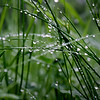 """Raindrops in the Grass"" by Michael, 17 