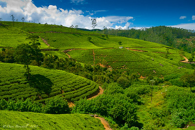 Mountain-Biking-Nuwara-Eliya-Sri-Lanka-3
