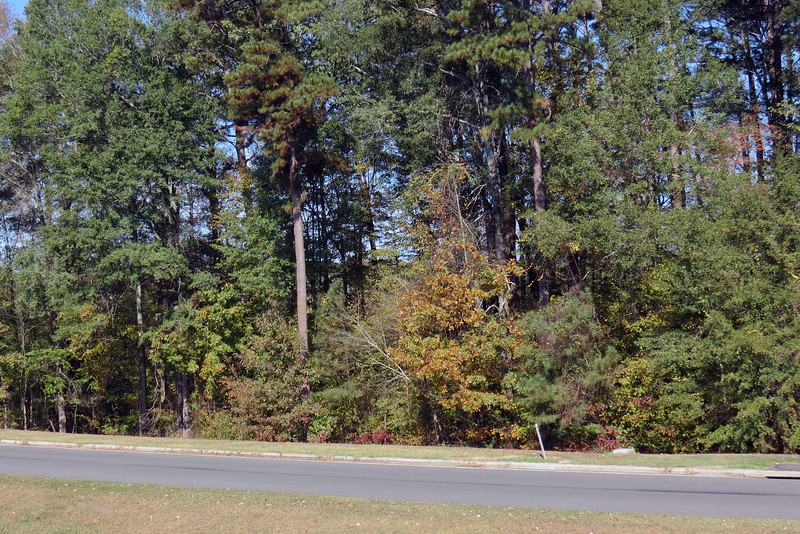 Some fall colors were still present.