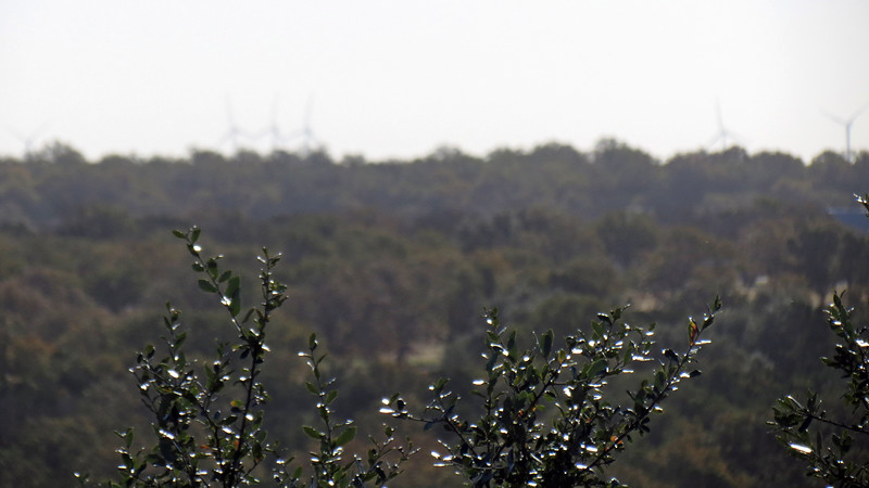 I spotted a wind farm off in the distance.  My first attempt at getting a picture resulted in the camera focusing on the bushes in the foreground.