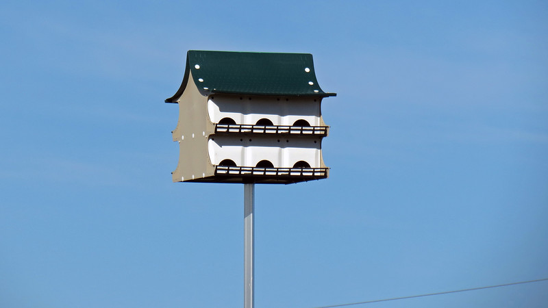 """""""Bird Condo Complex"""" may be a more accurate term as this place appeared to house multiple residents."""