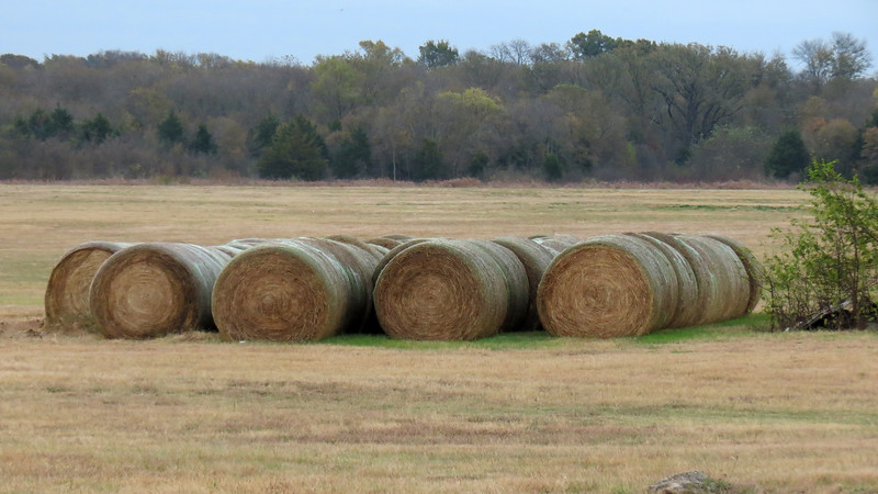My mildly autistic mind liked the nicely arranged and organized bales of hay that were all the same size !