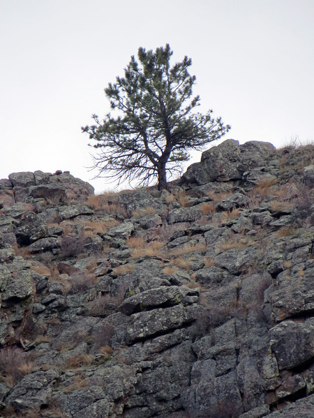 Zooming in on a tree on top of an unnamed summit to the south.