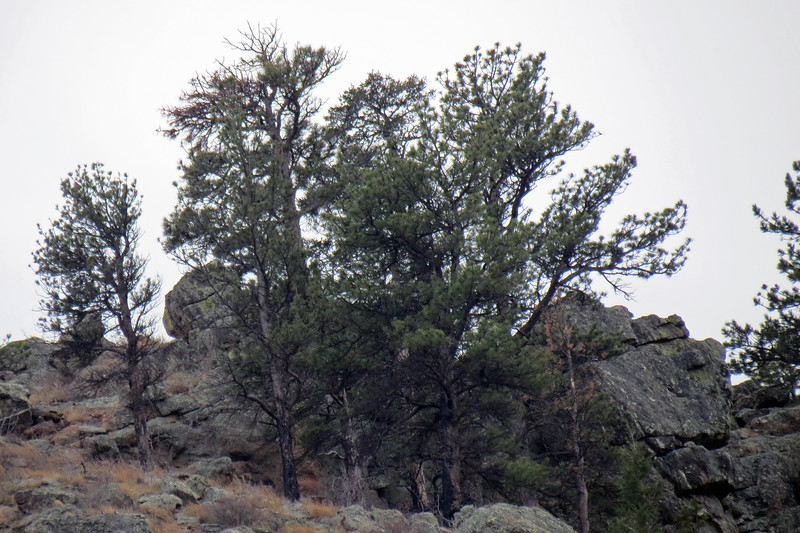 Zooming in on a cluster of trees on an unnamed summit to the south.