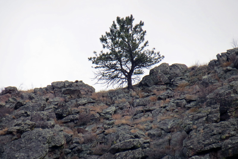 Zooming in on a single tree on top of an unnamed summit to the south.