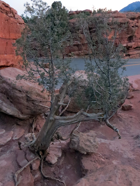 I saw another tree growing from the rocks below where I was standing.