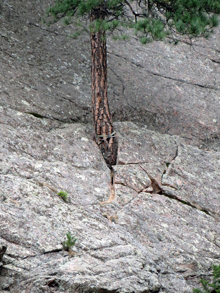It's amazing how a tree can grow from a small crack in the rocks.