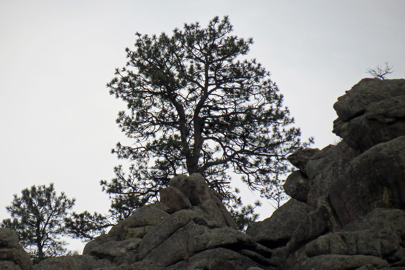 Putting my 35x lens to work zooming in on trees on top of the rock peaks across from where we were parked.