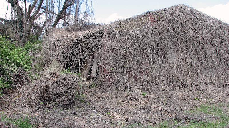 It's been abandoned long enough for whatever this vine is to completely engulf the entire house.