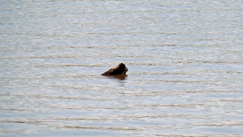 I saw something in the water and tried to zoom in.  It looks like a piece of wood.