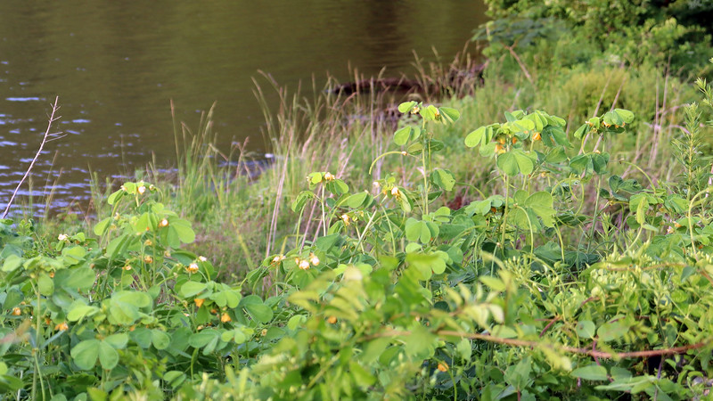 Zooming in on some flowers on the bank next to me.
