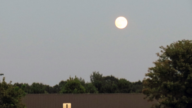 The moon looked pretty full on this night.