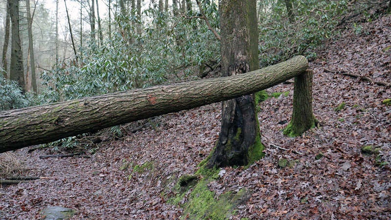 Several large trees look to have fallen over the trail recently.