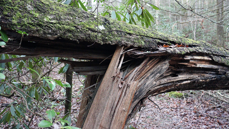 A large tree that had fallen across the trail.